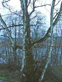 Вид с Мусатовского косогора